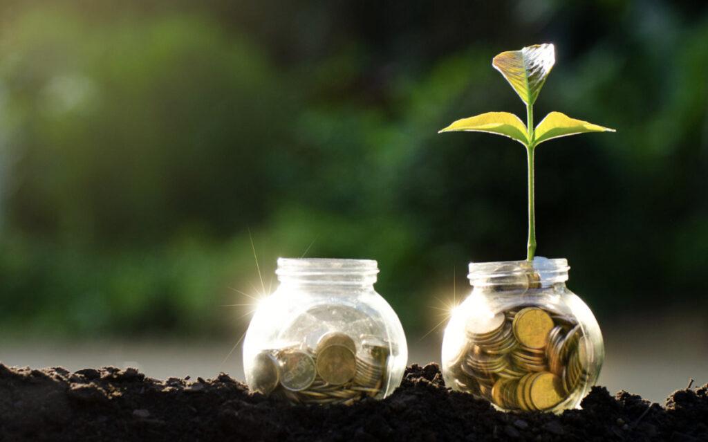 rośliny, doniczka z pieniędzmi